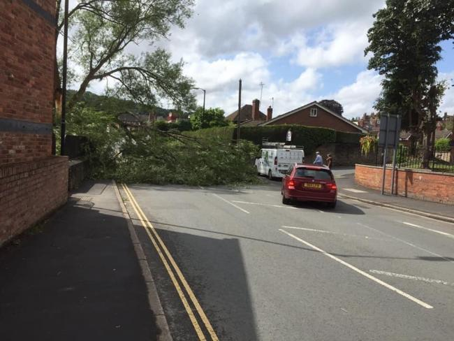 A fallen tree is partially blocking Temeside in Ludlow. Photo: Ludlow Life Holiday Cottages