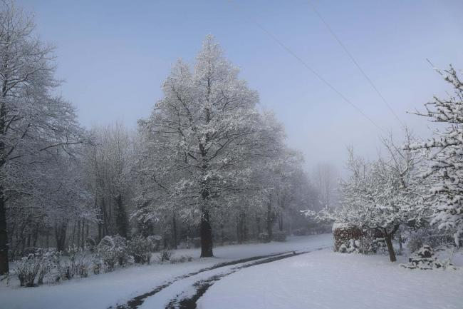 Al MacDonald took this snowy picture near Clungunford this week for the Ludlow and Tenbury Wells Advertiser Camera Club