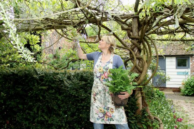 Ludlow Advertiser: Sarah Wint examines the wisteria at Heartfelt Garden. Picture by Keith Gluyas.