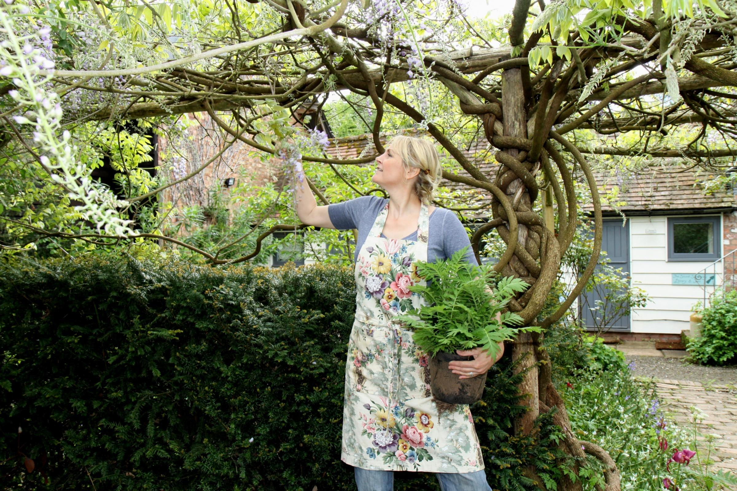 Sarah Wint examines the wisteria at Heartfelt Garden. Picture by Keith Gluyas.
