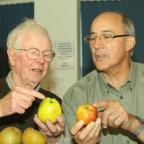 Ludlow Advertiser: John Lloyd and Jamie Wrench inspect some of the apples on view. Photos: Mark Bowen.