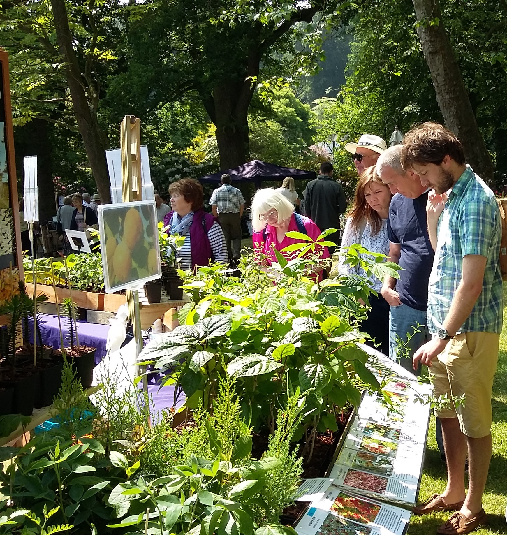 Plant Hunters' Fair at Bodenham Arboretum on Saturday 1st September