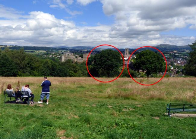 Plan to axe trees at Ludlow beauty spot sparks row